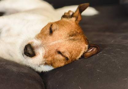 Pet Stain and Pet Odor Removal from Carpets